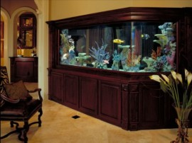 Un Acuario en Casa, Ideas para Decorar
