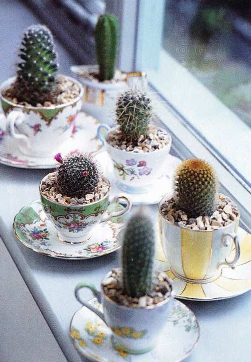 Decorando con cactus y tazas de porcelana decoracion in for Cactus decoracion