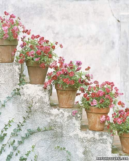 Decorando escaleras con macetas decoracion in for Jaula de la escalera de color idea