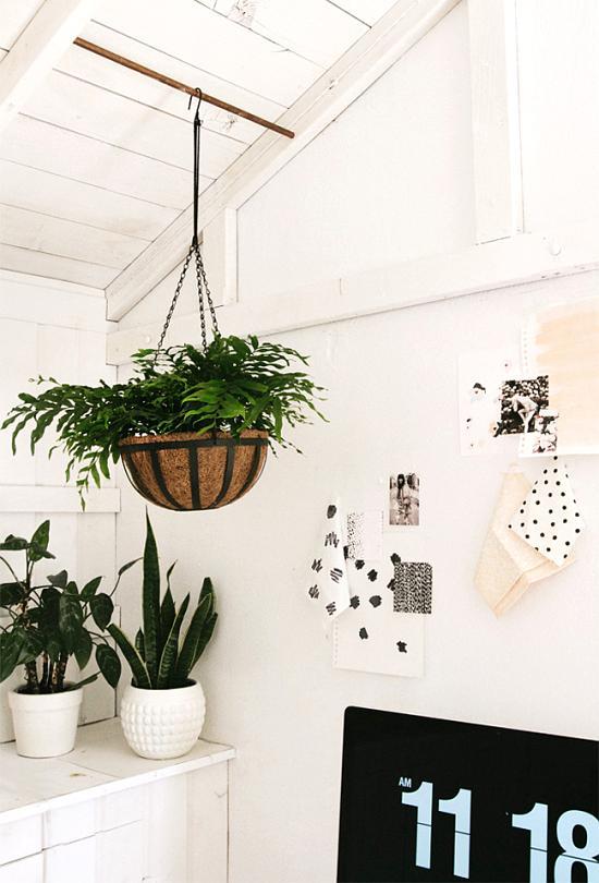 decorar con plantas interiores