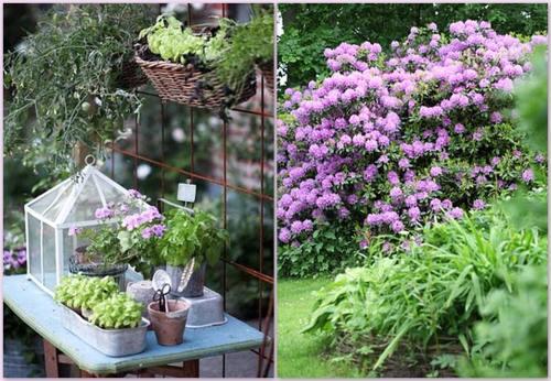 plantas y flores en jardines y terrazas