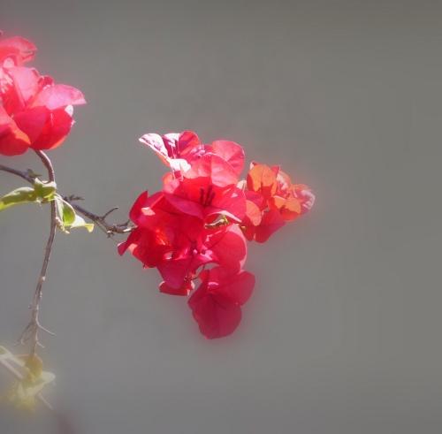 flores-santa-rita