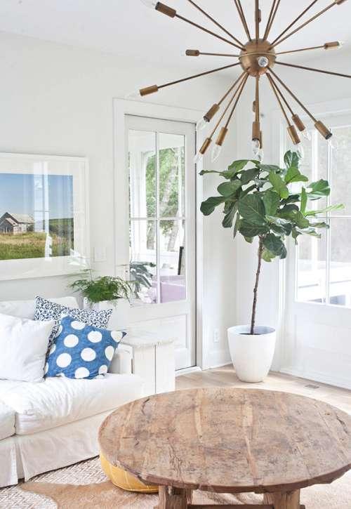 Plantas en el interior decoracion in for Decoracion plantas interior