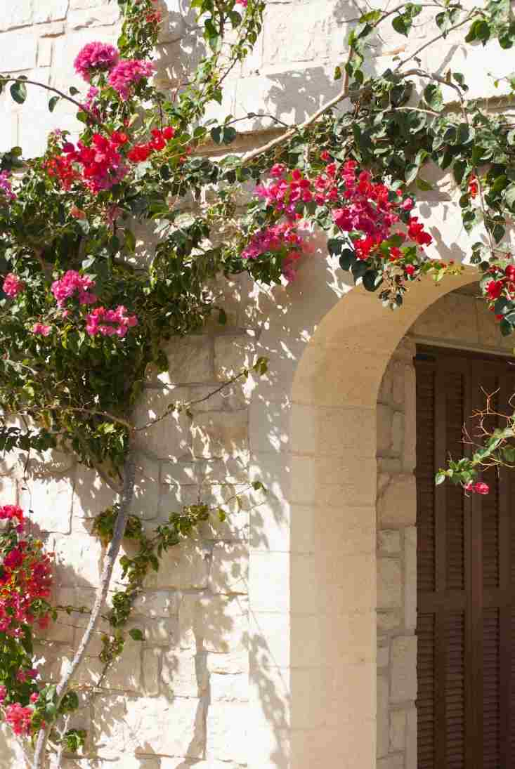 Renovar y decorar el exterior del hogar decoracion in for Fachadas con plantas trepadoras