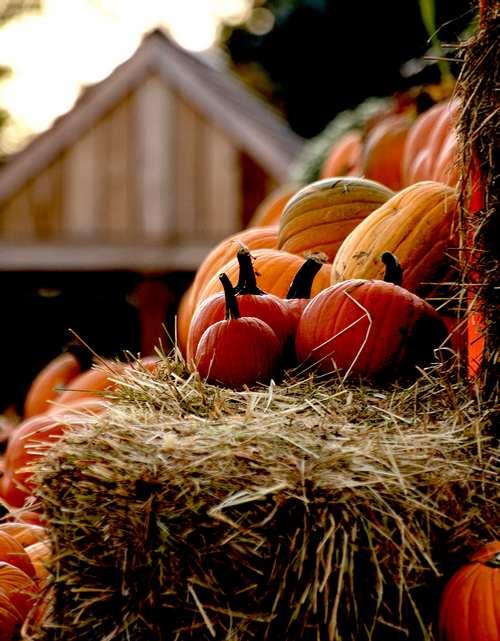 rincón con colores del otoño